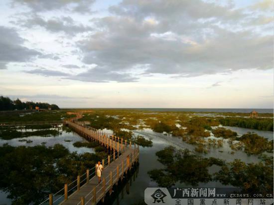 金海湾红树林保护区观景栈道.广西新闻网记者 黎超摄