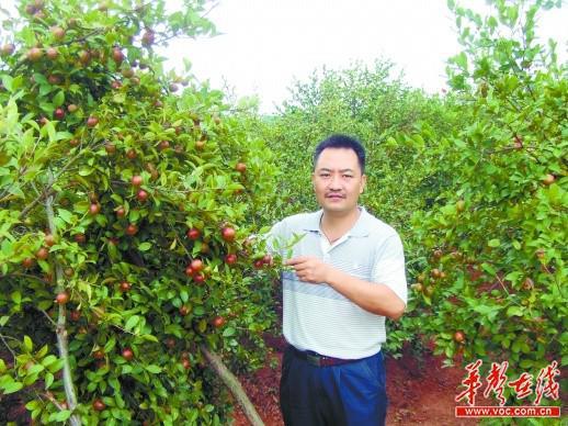 同时,他制订油茶栽培技术管理的周年历图册,将油茶早期树体培育