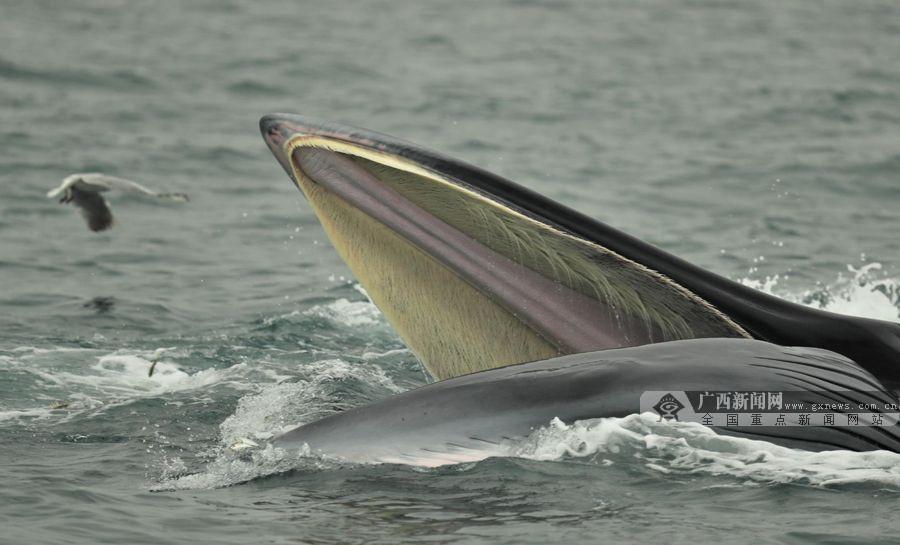 壁纸 动物 海洋动物 鲸鱼 桌面 900_545