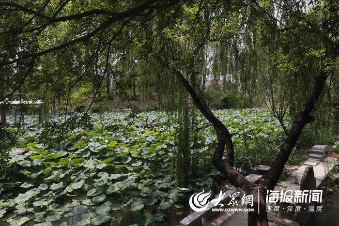 三亩荷塘汇成一片翠绿