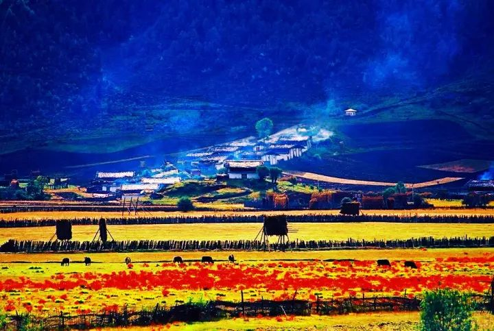 网王世界最美的风景